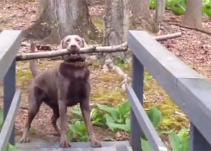 Smart Dog Solves Giant Stick and Narrow Bridge Problem