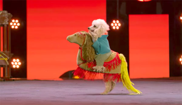 Pompeyo Family Dogs wows judges on America's Got Talent 2017 Judge Cuts