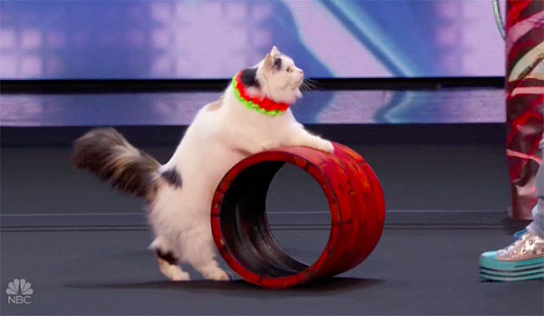 Savitsky Cats Impress the Judges on America's Got Talent 2018