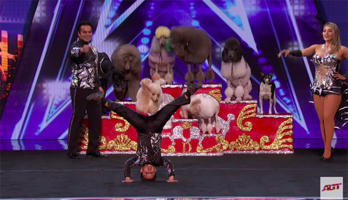 Dominguez Poodles America's Got Talent 2019 Audition Performance Video