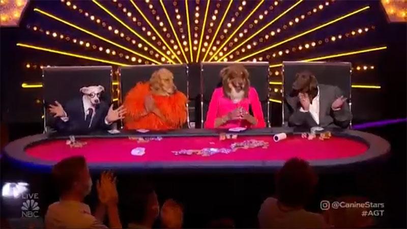 The Canine Stars America's Got Talent 2021 AGT Quarterfinals Performance